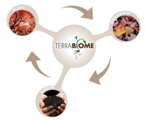 terrabiome_driebolletjes-300x248