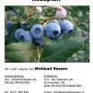 Blauwe bessen recepten e-boekje